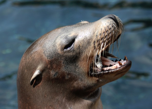 Fish Breath Sea Lion