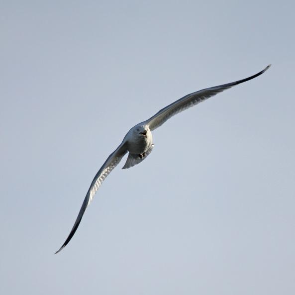 Bempton Cliffs, East Yorkshire, Wildlife Photography