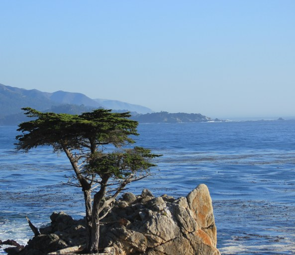 17 Mile Drive, California, Landscapes, Photography