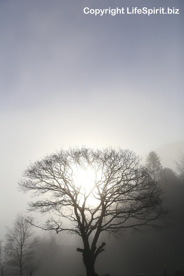 Oak Tree, Photography, Dawn, Life Spirit, Mark Conway
