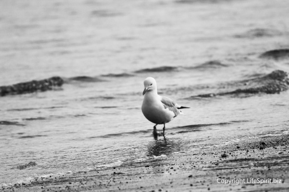 Gull, B&W, Mark Conway, Beach, Life Spirit