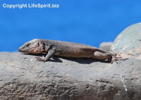 Wildlife Photography, Giant Lizard, Life Spirit, Mark Conway, Nature,