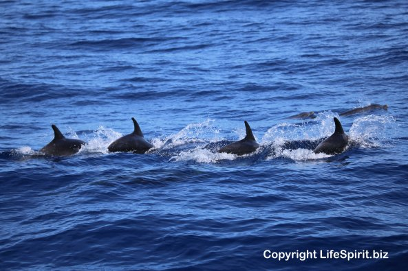 Bottle-nosed Dolphins, Mark Conway, Life Spirit, Wildlife Photography