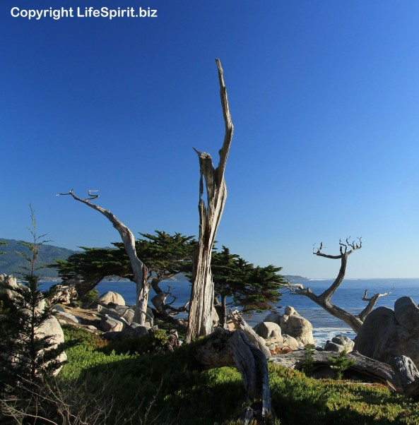 17 Mile Drive, Nature, Landscapes, Photography, mark Conway, Life Spirit