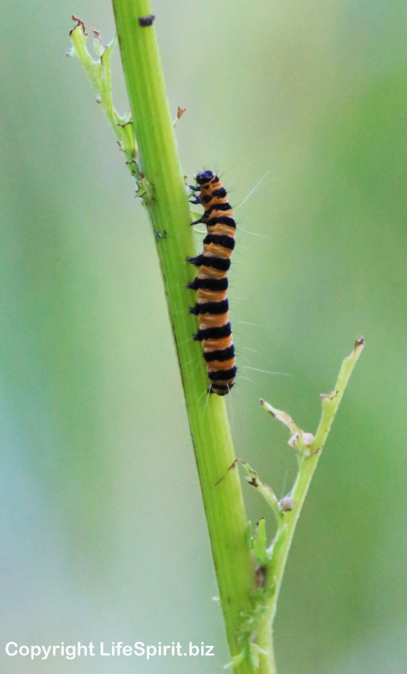 Caterpillar, East Yorkshire, nature, Insects, Mark Conway, Life Spirit, Nature, Wildlife Photography