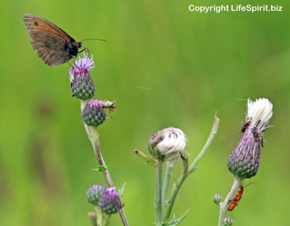 Butterfly, Insects, Mark Conway, Life Spirit, East Yorkshire