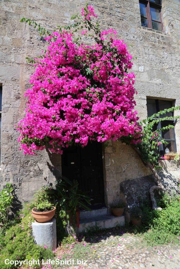 Rhodes Town, Rhodes, Greece, Life Spirit, Flowers, Pink. Mark Conway