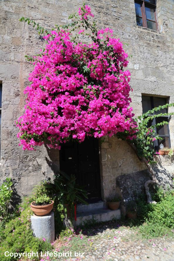Rhodes Town, Rhodes, Greece, Life Spirit, Flowers, Pink. Mark Conway