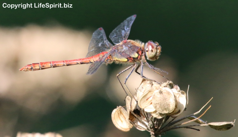 Dragonfly, East Yorkshire, Nature, Wildlife Photography, Life Spirit, Mark Conway