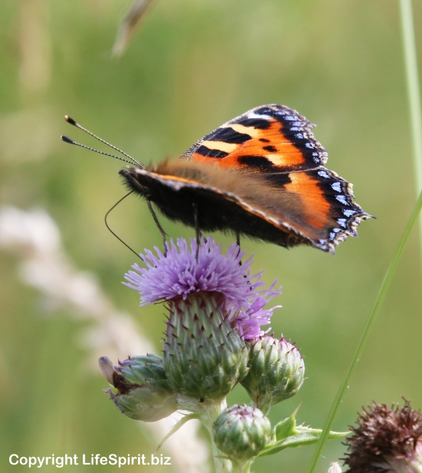 Peacock Butterfly, Insects, Nature, Wildlife Photography, Life Spirit, Mark Conway