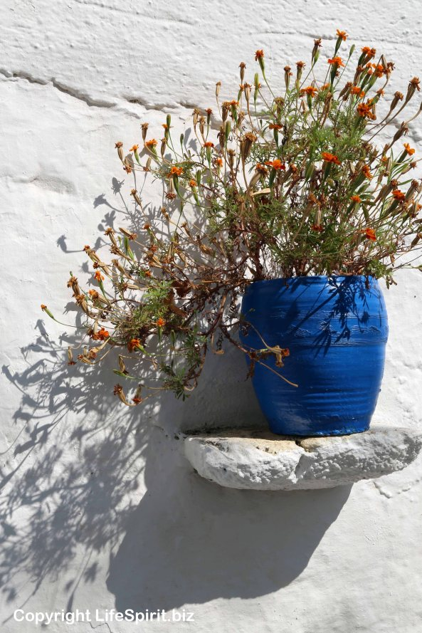 Rhodes, Greece, Flower, Mark Conway, Life Spirit, Nature