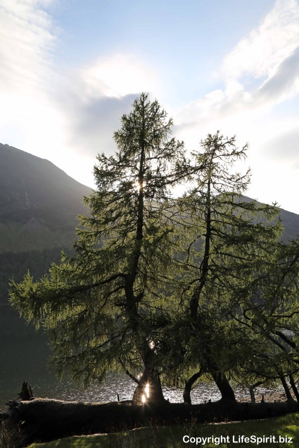 Tree, Buttermere, Lake District, Mark Conway, Life Spirit