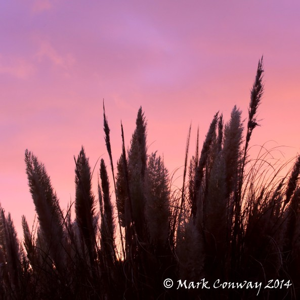 Sunset, Grass, Nature, Photography, Life Spirit, Mark Conway