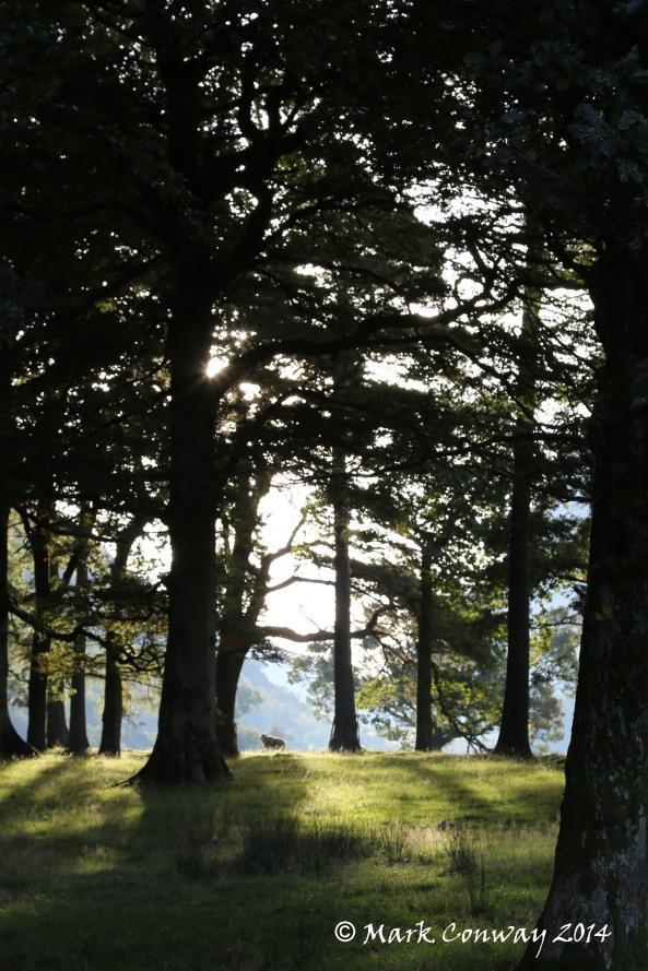 Lake District, Sheep, Hiking, Nature, Wildlife, Photography, Life Spirit, Mark Conway