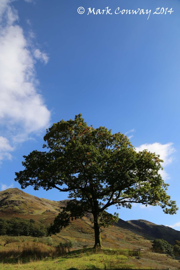 Oak Tree, Landscape, Lake District, Cumbria, Landscape, Life Spirit, Mark Conway