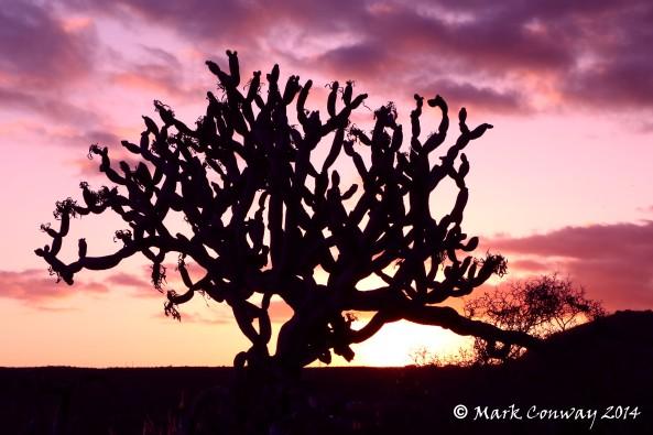 Senecio kleinia, Gran Canaria, Nature, Photography, Sunset, Mark Conway, Life Spirit
