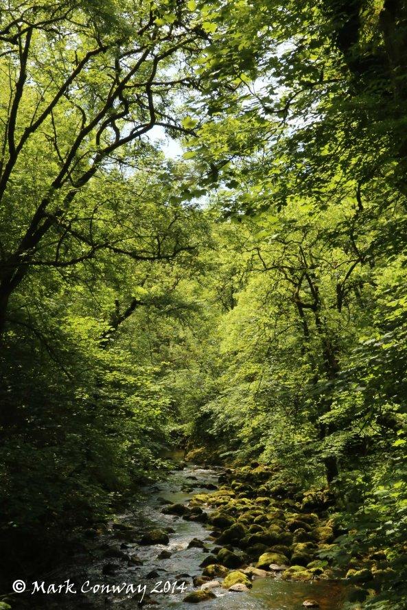 Ingleton Falls, Nature, Yorkshire Dales, National Park, Mark Conway, Life Spirit, Photography