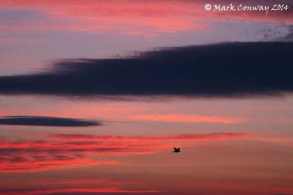 Abersoch, Llyn Peninsula, Wales, Wildlife, Sunrise, Mark Conway, Photography, Life Spirit